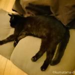 石油ファンヒーターの前でのびのび過ごす猫