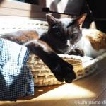 「メイズ製ペット用ベッド」から足がはみ出る猫