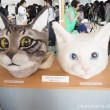 リアル猫ヘッドアート