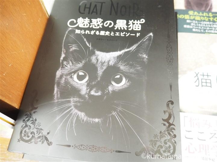 魅惑の黒猫