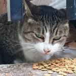 外神田の猫さんたち