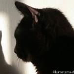 「オムロン メッシュ式ネブライザ NE-U22」で吸入し始めてから、顎の毛が長くなった猫