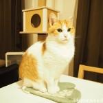 鍋つかみに乗った猫のヒゲの寝癖にびっくり(゚д゚)!