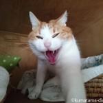 あくびした瞬間のブサイクな猫の顔