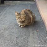いじめっ子がいなかったのでゆっくりしていたキジトラ猫さん