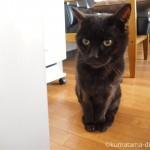 エサが足りない時は、空気清浄機の前で待つ猫