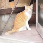 南千住の茶トラ白猫さん