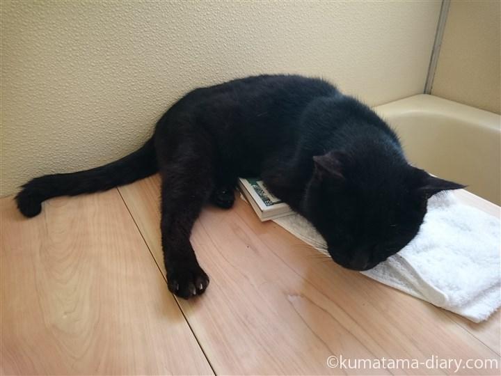 本の上で寝るくま