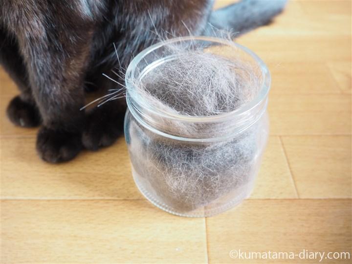 猫毛とくま