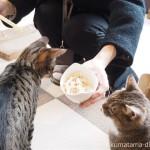 狭山市の保護猫カフェ「funnycat(ファニーキャット)」で猫におやつをあげました