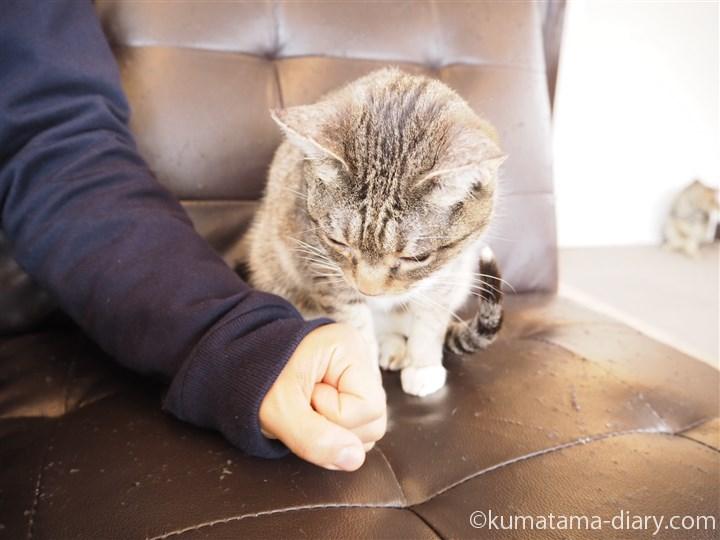 うさぎちゃんと彼の手