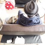 ソファーの中に猫が隠れている狭山市の保護猫カフェ「funnycat(ファニーキャット)」