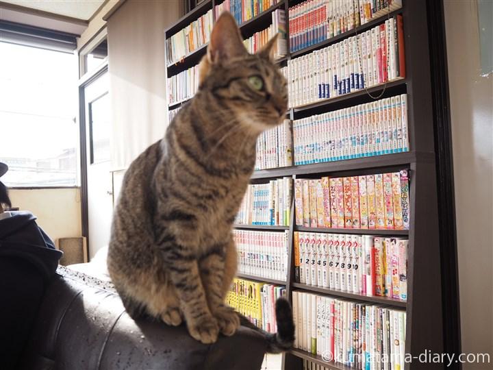 ソファーの背に乗る猫