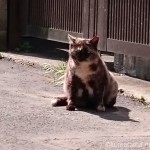 巣鴨の猫さんたち
