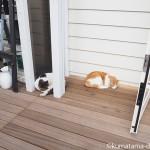 【入間市】ジョンソンタウンで気持ちよさそうに眠る2匹の猫さん