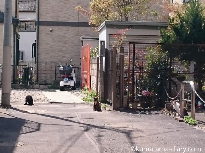 3匹の猫さん発見