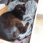 一匹になれる場所を新しく見つけた猫