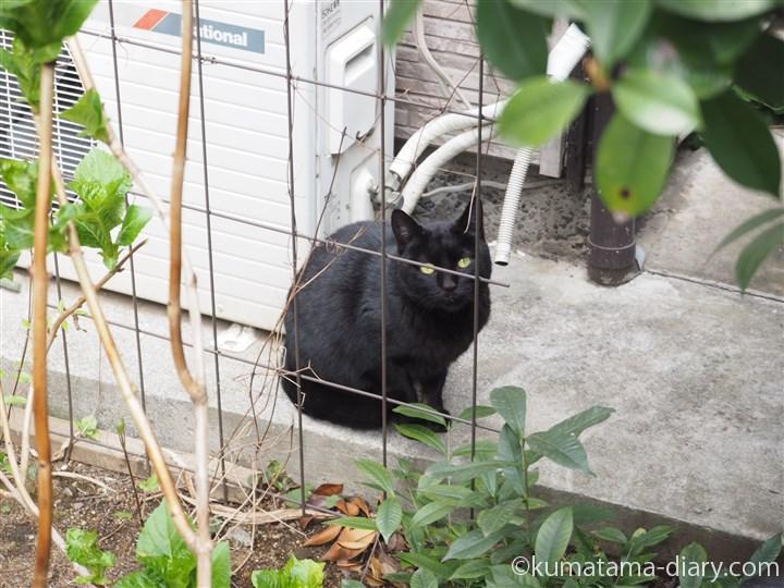 中村橋の黒猫さん