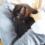 彼に抱かれ独自のマッサージをされた猫