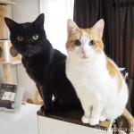 キッチンカウンターの上でエサを待つ2匹