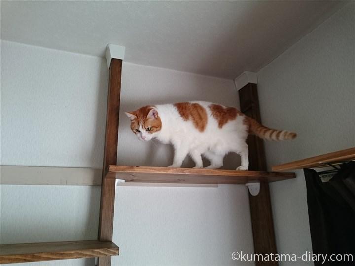 キャットウォークにやってきた猫