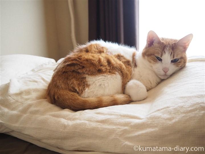 枕の中央で寝るたまき