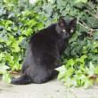 かっこいい黒猫さん