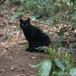 黒猫をかわいく撮るコツと狭山稲荷山公園の黒猫さん