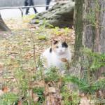 日比谷公園の三毛猫さん