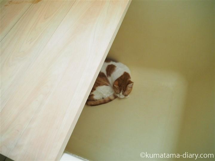 浴槽で寝るたまき