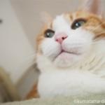 お尻が濡れたままキャットタワーにいる猫