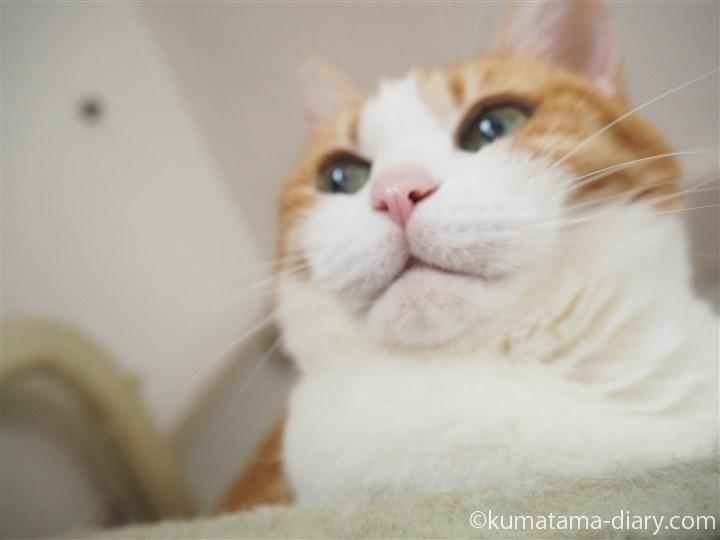 キャットタワーの猫の顔