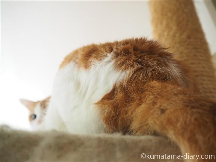 お尻が濡れている猫