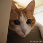 寝室のベッドの上にいる猫