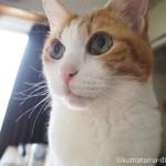 猫のひげ袋はマズルではなく、ウィスカーパッドと言うそうです