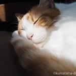 窓辺に置いたIKEAの「DUKTIG 人形用ベッド」で眠る猫