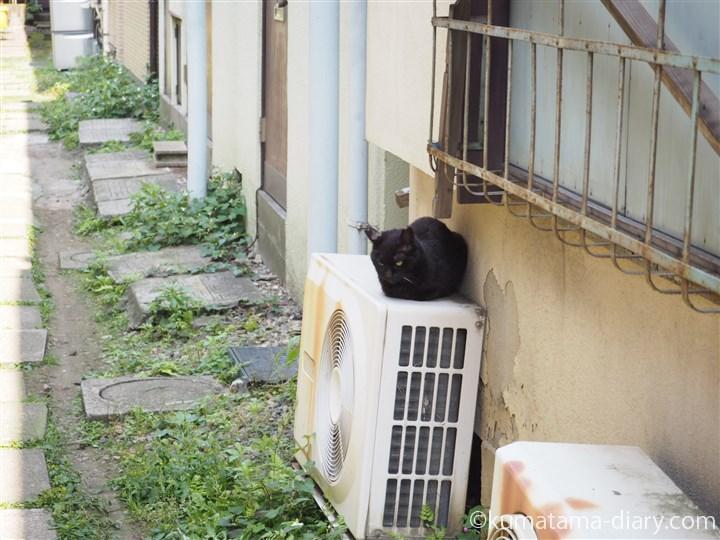 室外機の上の黒猫さん