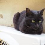 【谷根千ねこ散歩】路地の黒猫さんと茶トラ猫さん