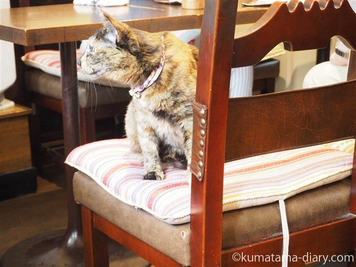 椅子にいるニーナちゃん