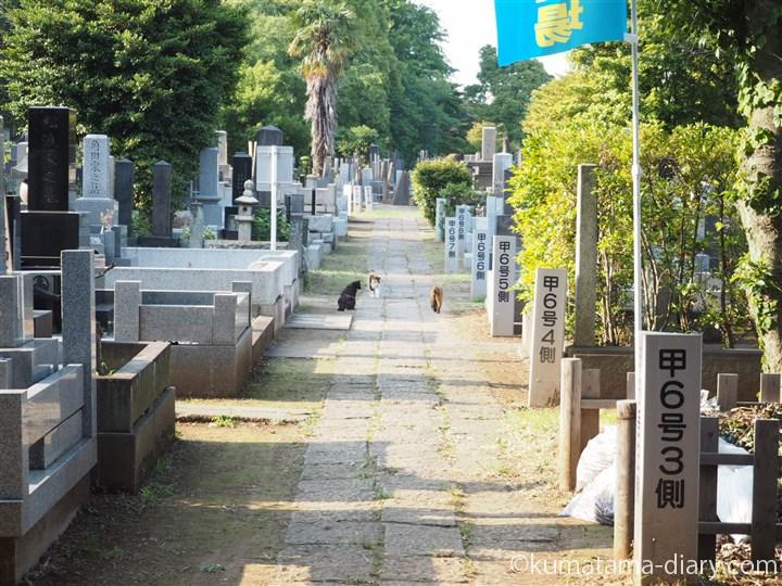 谷中墓地にて猫さん発見