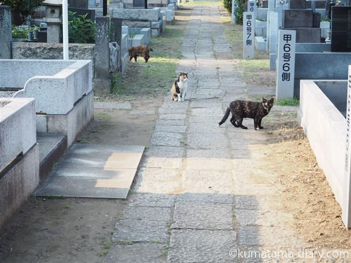 こちらに気づく猫さん達