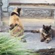 三毛猫さんとサビ猫さん