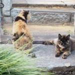 【谷根千ねこ散歩】谷中墓地のサビ猫さんと三毛猫さん