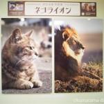 日本橋三越本店で岩合光昭写真展「ネコライオン」を見てきました