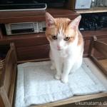 ネコの誕生日に「猫ozabu(おざぶ)オーガニックコットンキルト猫用マット」をプレゼント
