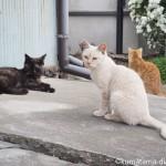 治良門橋の猫さんたち