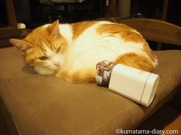 ネブライザで吸入する猫