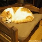IKEAの「DUKTIG 人形用ベッド」で眠る猫【レビュー】