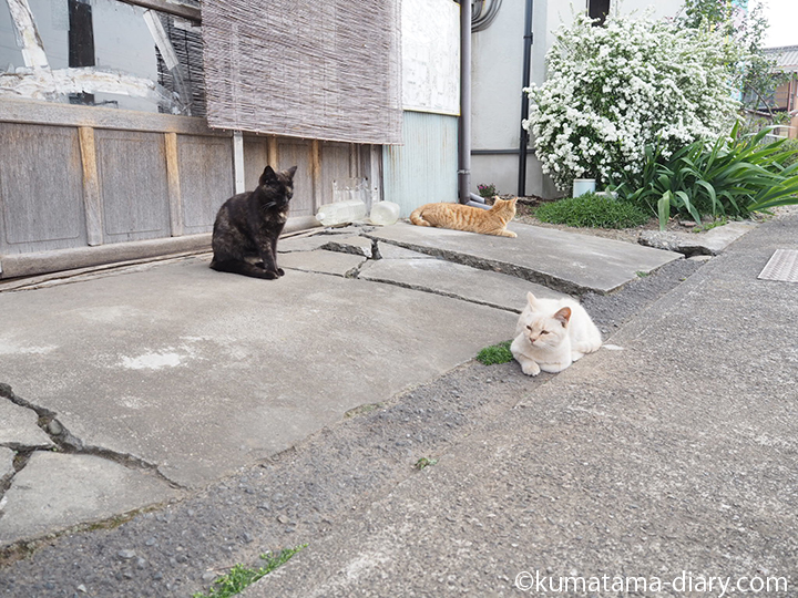 3匹の猫さんたち