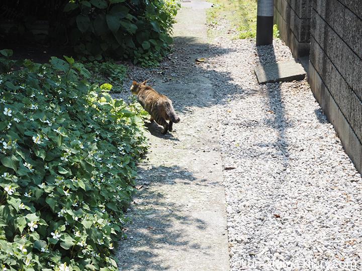 逃げる猫さん